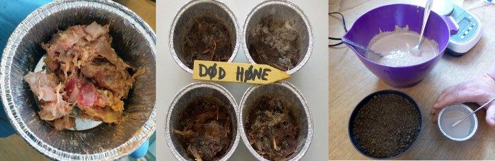 Fra venstre: Ferskt materiale av hele høner etter avliving og hakking. I midten: Samme materiale etter 4 måneders lagring ved 10-15 ºC. Til høyre: Bollen inneholder sediment etter hydrolyse av slaktede, finmalte høner. Sedimentet ga god vekst til raigras i et potteforsøk, se figur 1