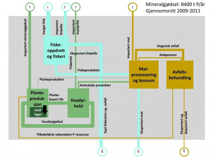 Forenklet versjon av fosforstrømsanalysen av det norske matvaresystemet. Tykkelsen til de ulike strømmene tilsvarer mengden fosfor i forhold til importert mineralgjødsel (8400 t fosfor per år). I = import, E = eksport. Referanse: Hamilton et al. (2016)
