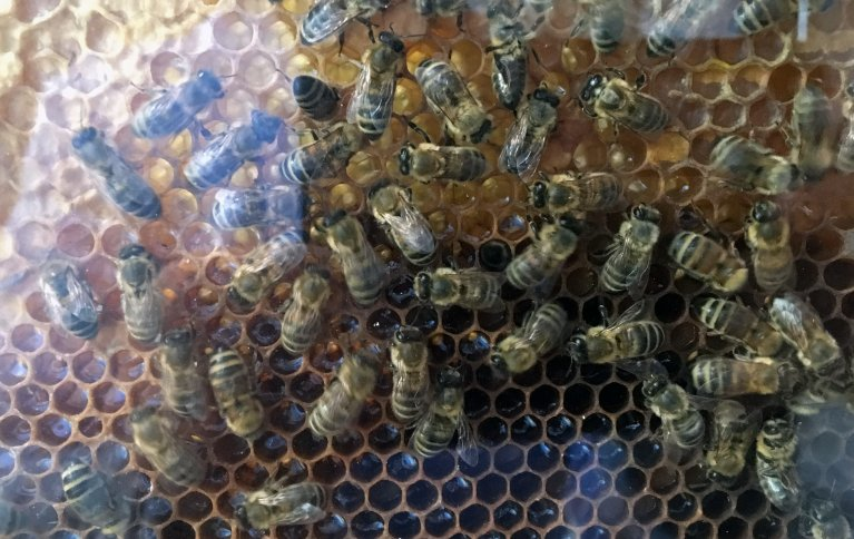 I områdene med økologisk drift er det flere blomstrende vekster om våren, blant annet ugras, fangvekster og kantsoner. Det liker biene. Foto: Anita Land