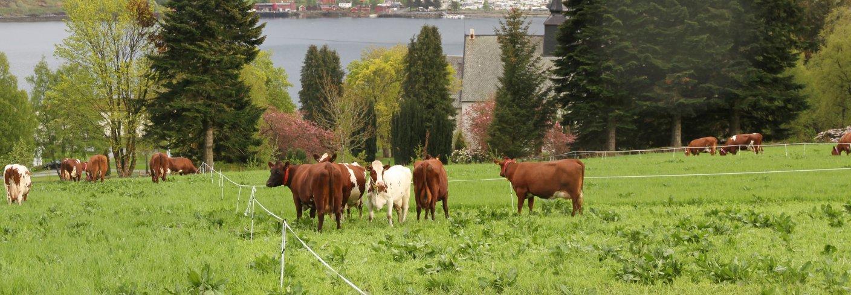 Studier som tyder på at beitebruk fører til økt lagring av karbon i beitemark. Foto: Anita Land