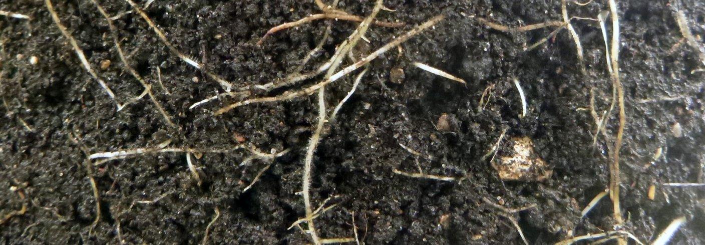 I jorda er konsumentene (de som bruker organisk materiale) i hovedsak bakterier, sopper, nematoder, insekter og meitemark. Foto: Reidun Pommereche