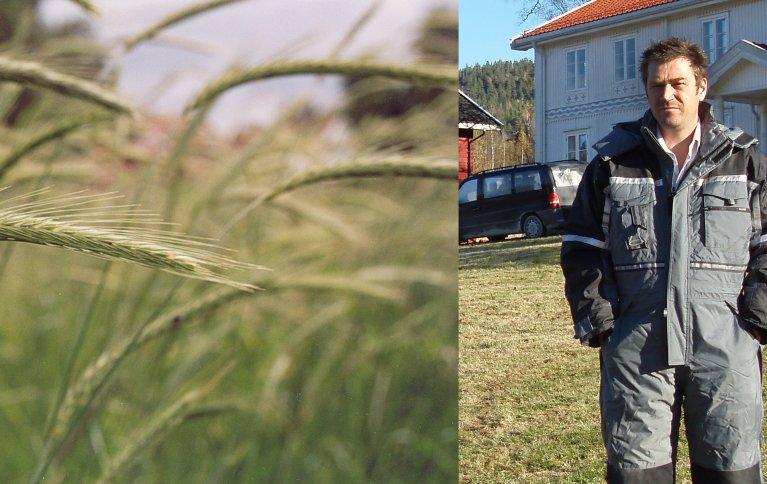 Anders Næss (bildet) vil i framtida utvikle produkter bygd på spesialkorn, blant annet finnrug (bildet). Foto: Randi Frøseth og Hege Sundet