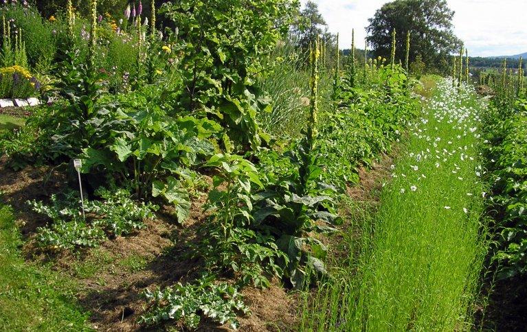 Dyrkingsystem påvirker binding av karbon. Bildet viser en hage med vekstskifte. Foto: Kirsty McKinnon