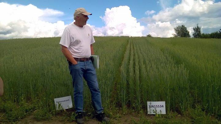 Jon Arne Dieseth i Graminor er en engasjert foredler av vårhvete, som gjerne deler kunnskap på markdager i forsøksfelt. Foto: Anne-Kristin Løes