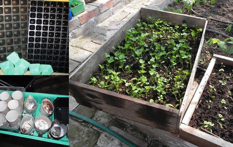 Potter og brett til oppal av småplanter. Vi kan gjenbruke bokser og beger, kjøpe utstyr spesielt til formålet eller lage selv. Foto: Kirsty McKinnon