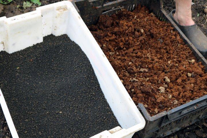 Bløtgjødsel fra storfe kan omdannes til ulike gjødselprodukter. Til venstre granulert gjødsel, til høyre den tørre fraksjonen etter separering i en skrueseparator. Foto: Ole Engen