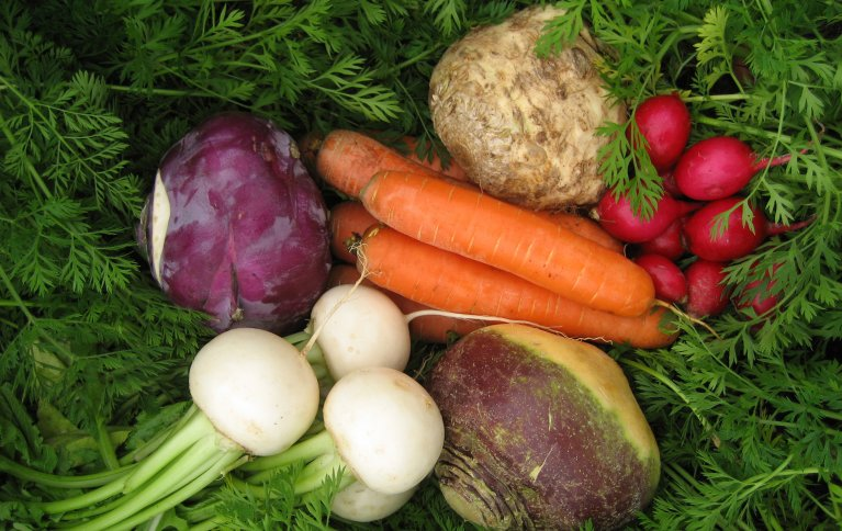 Nok tilgang av næringsstoffet bor må til for å få planteprodukter av god kvalitet. Det er i grønnsakskulturer, frukt og bær at det er mest aktuelt å tilleggsgjødsle med bor. Foto: Ingun Vågen