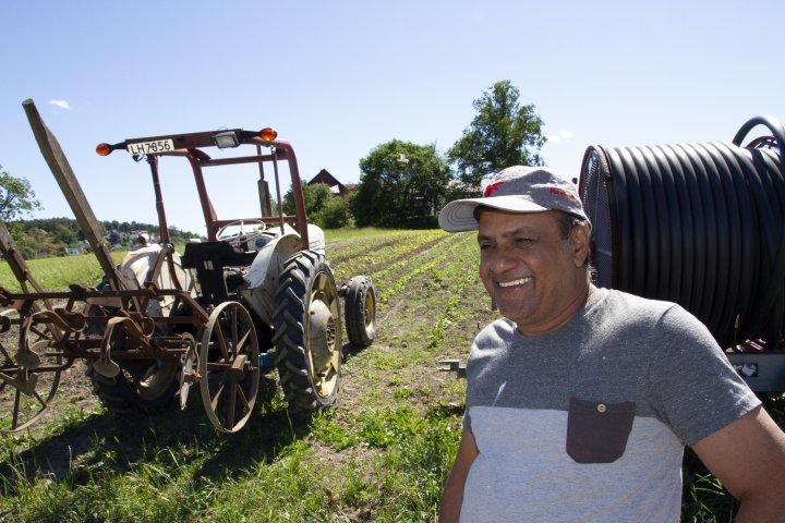 Ranjit Singh har arbeidet på gården i mange år og er uunnværlig i vekstsesongen. Foto: Anita Land