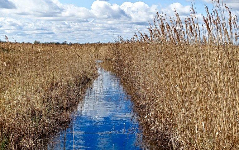 DRENERING: Viktig for agronomi og miljø. Foto: pxhere