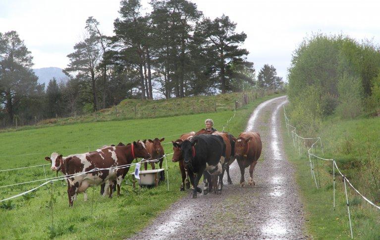 Hva er best for miljøet økologisk eller konvensjonelt landbruk. . Foto: Anita Land