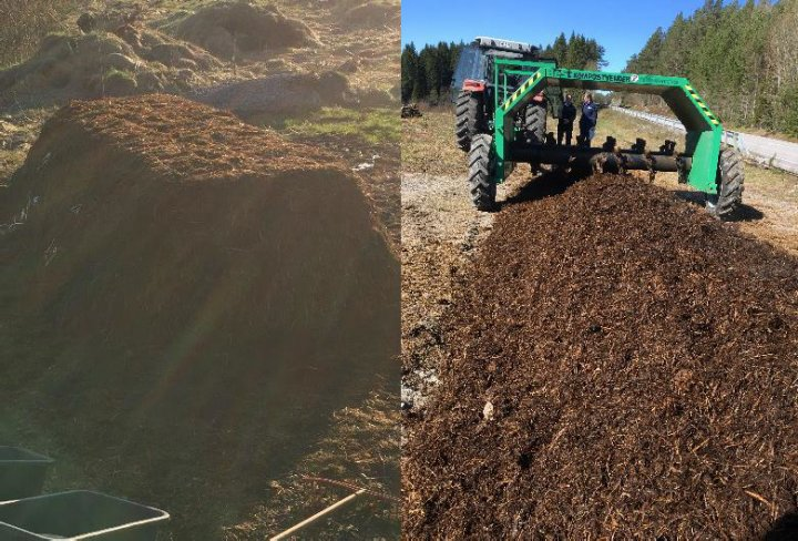 Samme storfetalle behandles etter to ulike metoder i et prosjekt ved NORSØK. Massene til høyre luftes og blandes med en kompostvender (grønn). Tallen til venstre legges som en haug med flat topp (trapesform), litt tettpakka ytre lag og skal ikke snues. Mikroorganismene i de to haugene får ulike miljøforhold, men begge steder omdannes organisk materiale til jord. Næringsinnhold, karbondynamikk og gasser skal sjekkes. Foto: Reidun Pommeresche