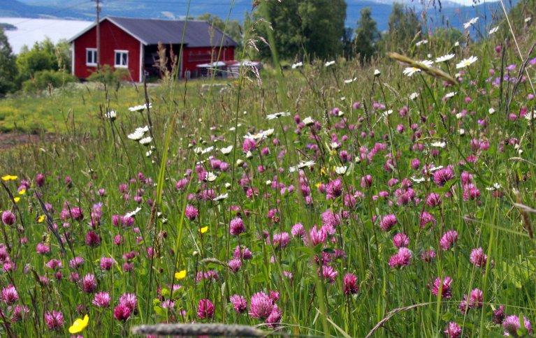 MER ROBUST: Blomstereng med mange arter er mer robust mot skadedyr enn monokultur viser en tysk/amerikansk studie. Foto: Anita Land