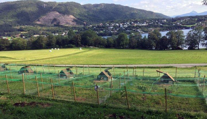 Noen av husene og uteområdene i forsøket på Tingvoll gard. . Foto: Steffen Adler
