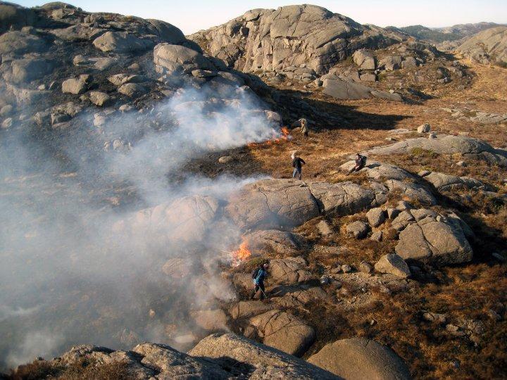 Kontrollert brenning av lyng gir gode beiter og er dessuten viktig for å hindre ukontrollerte branner. Her brennes det mot vinden på Ognaheia i Rogaland. Foto: Ane Harestad